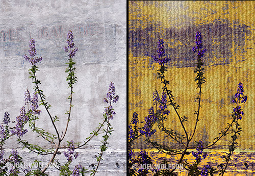 Here's a before (left) and after (right) where I started in ReStyle. In ReStyle, a really fun plug-in, you can choose your color palette so I used it to get vivid purple and yellow. Then I hopped in to Texture Effects and used a Texture layer to create the corrugated metal look for the wall and a Light Leak layer to make it look like a spot of sun reflected on the wall. I used the masking available in each layer to isolate it. In the end only two layers plus a Basic Adjustment layer and a few minutes to make this image.